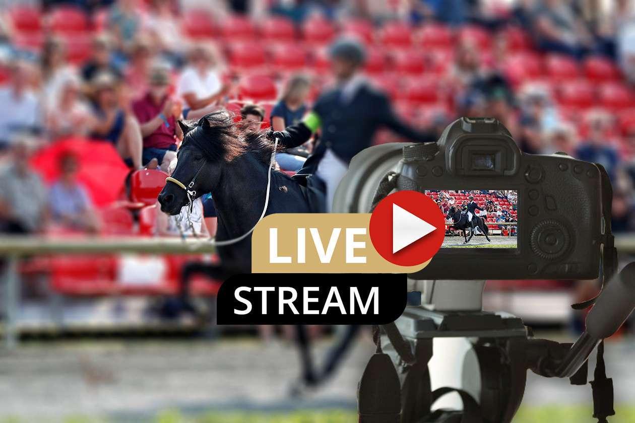 DIM-Livestream ab sofort buchbar